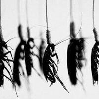 борьба с паразитами народными средствами