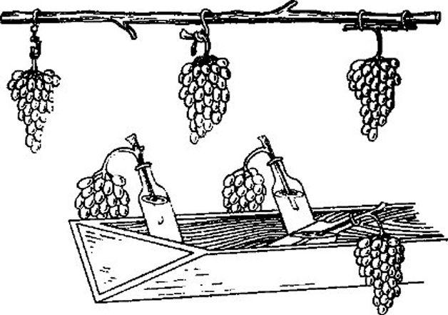 Схема размещения в погребе