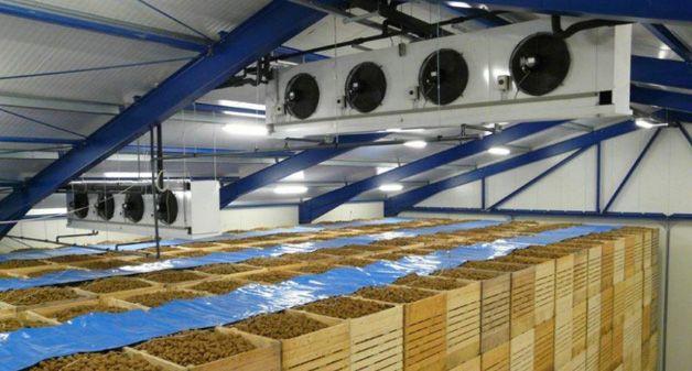 Вентиляция в овощехранилища